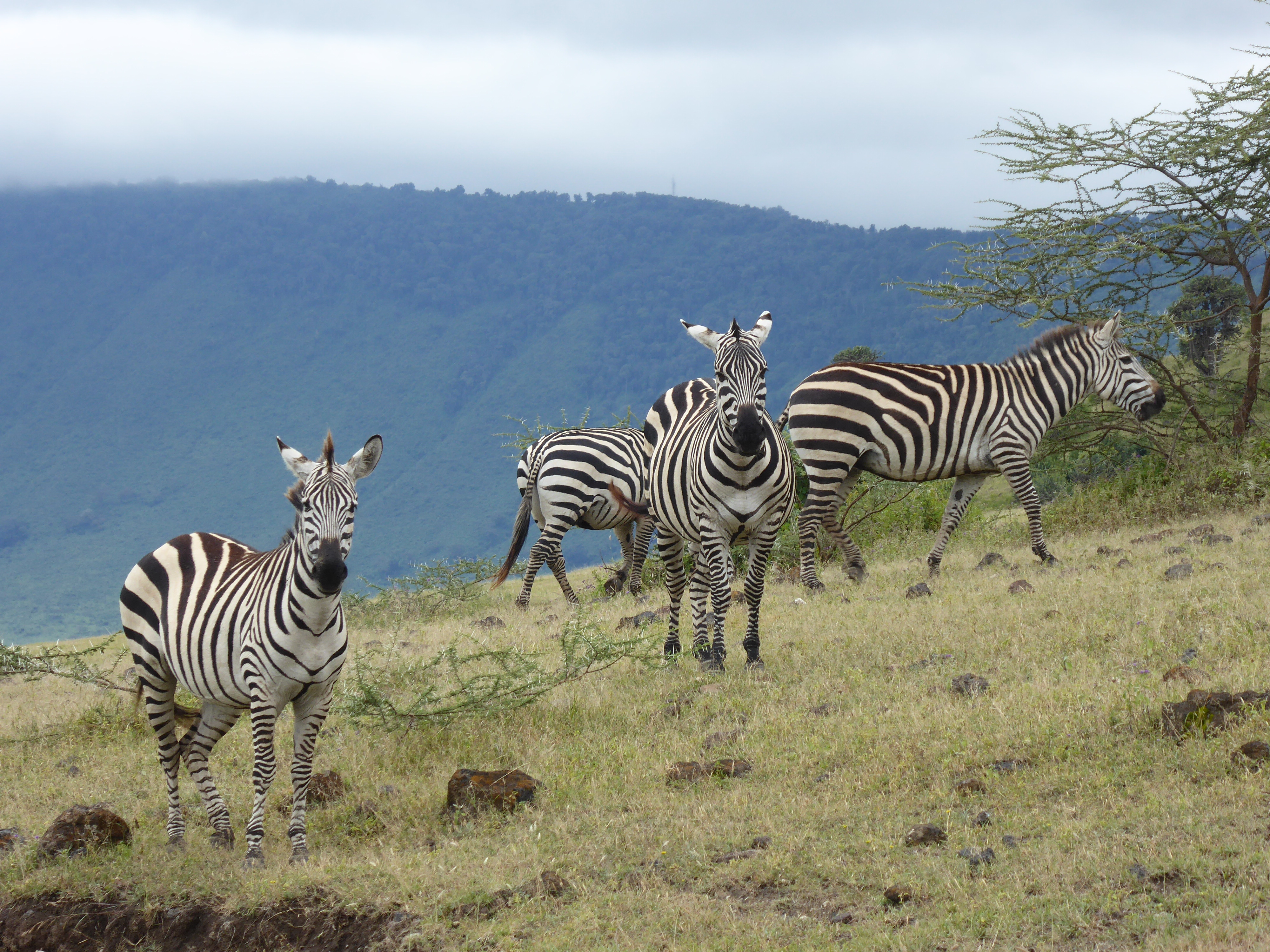A SAFARI IN KENYA: 16 ANIMALS YOU CAN EXPECT TO SEE