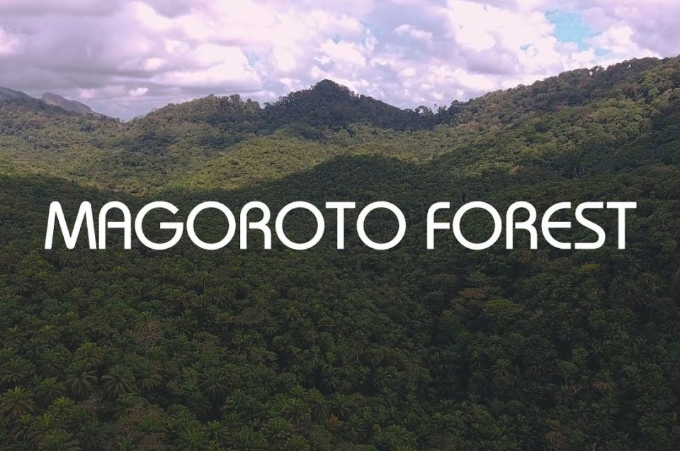 Magoroto Estate Short History